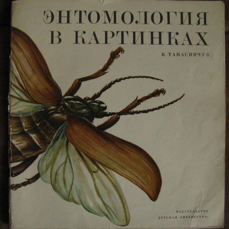 мдф энтомология в картинках для тех, кто