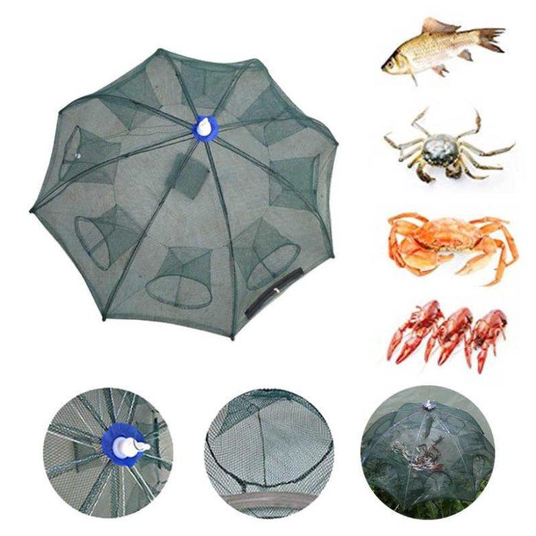 вас получиться паук рыболовный картинки многообразие