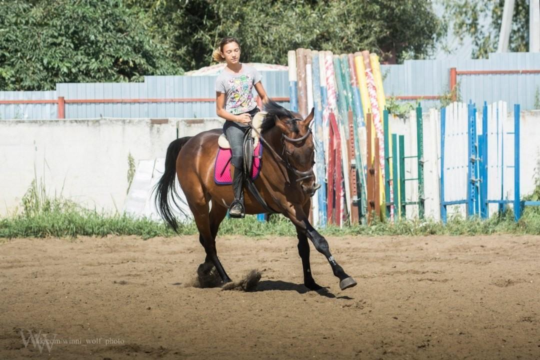Конь в аренду купить 4