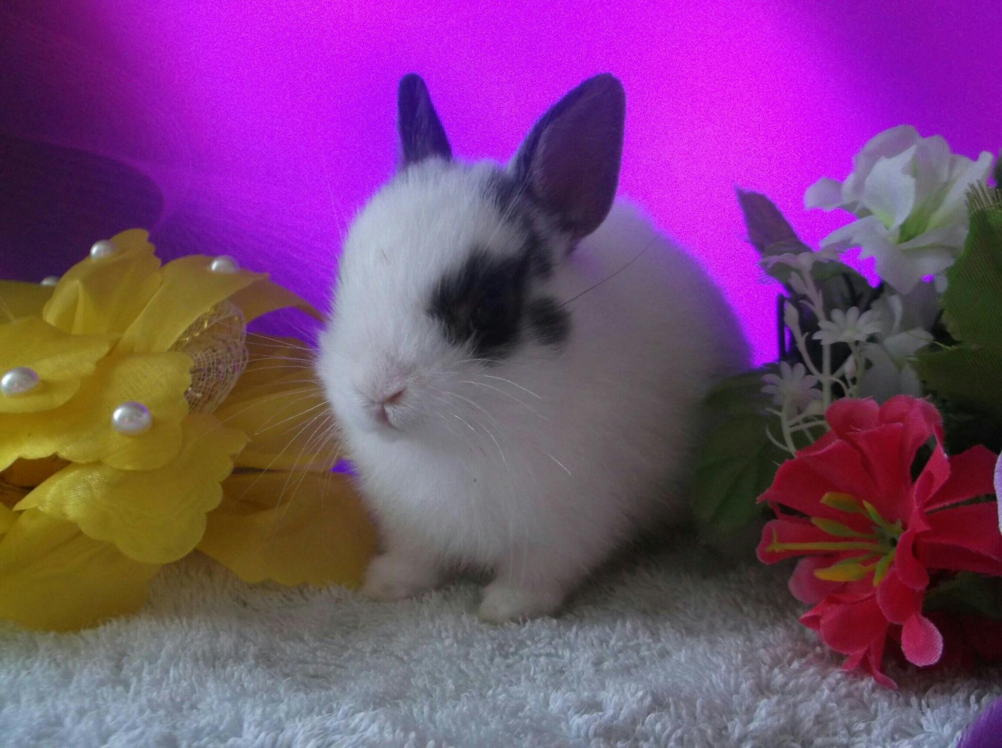 20 карликовых крольчат