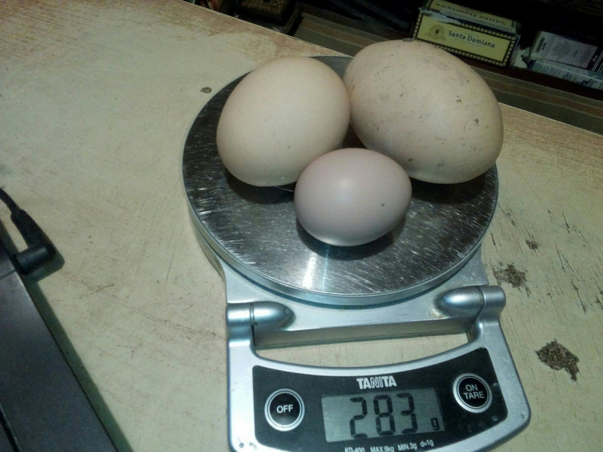 Домашние яйца от курочки Рябы