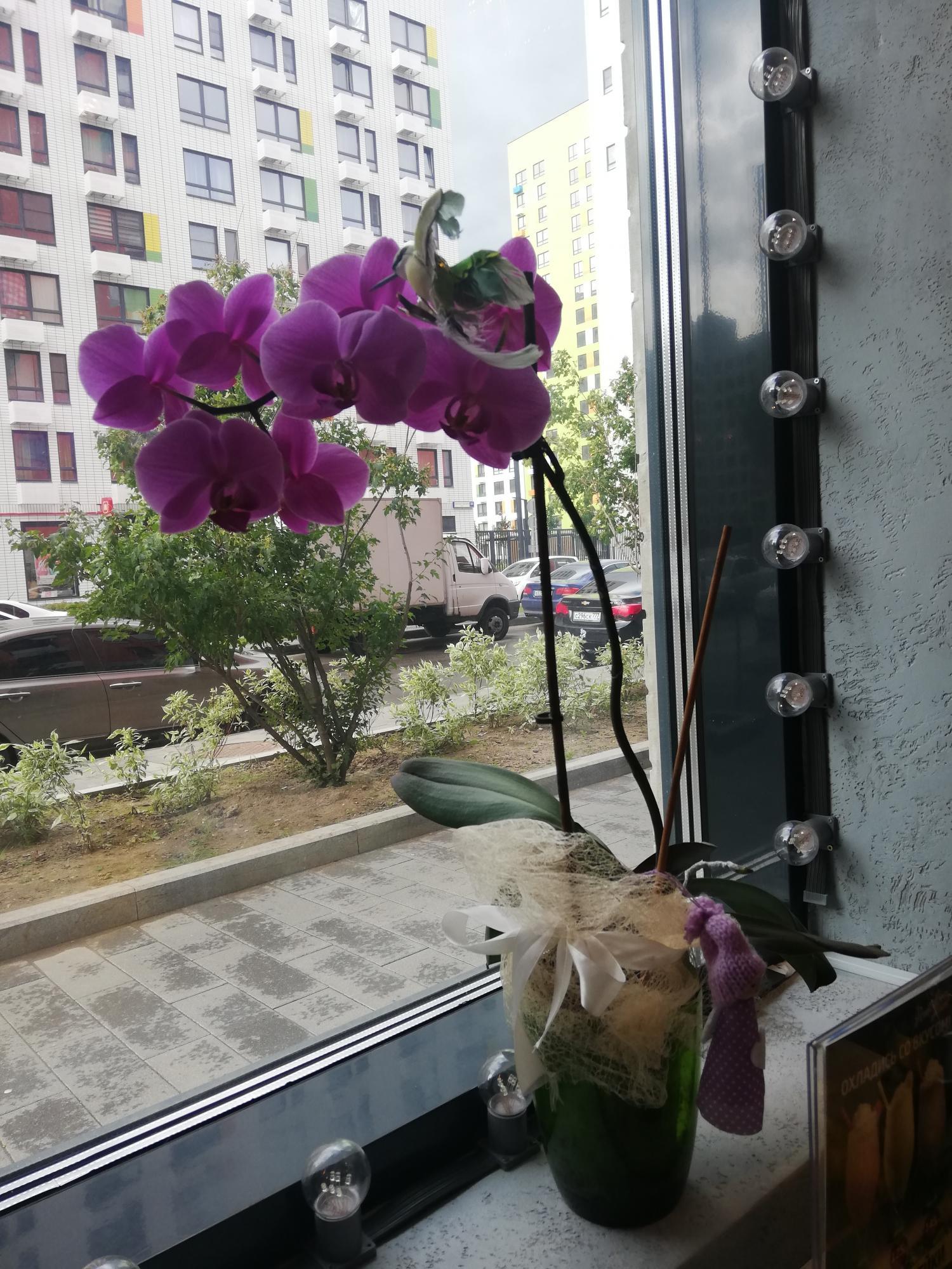 Окна Столицы в Москве 89037991429 купить 1