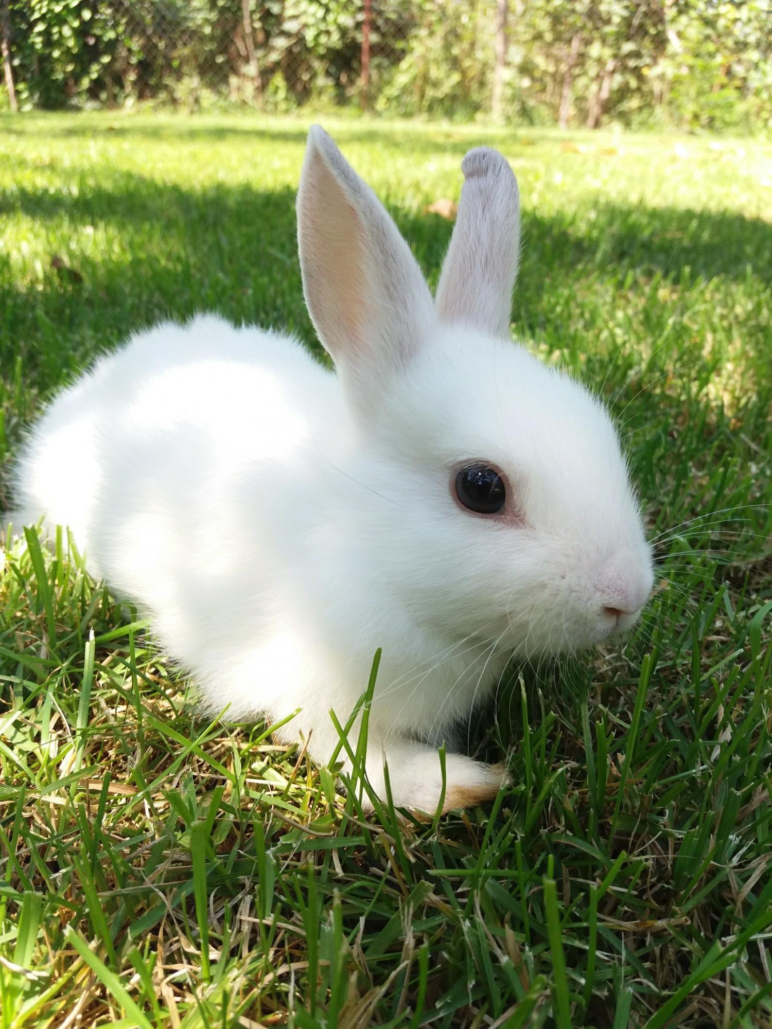 Виды декоративных кроликов с фото москва