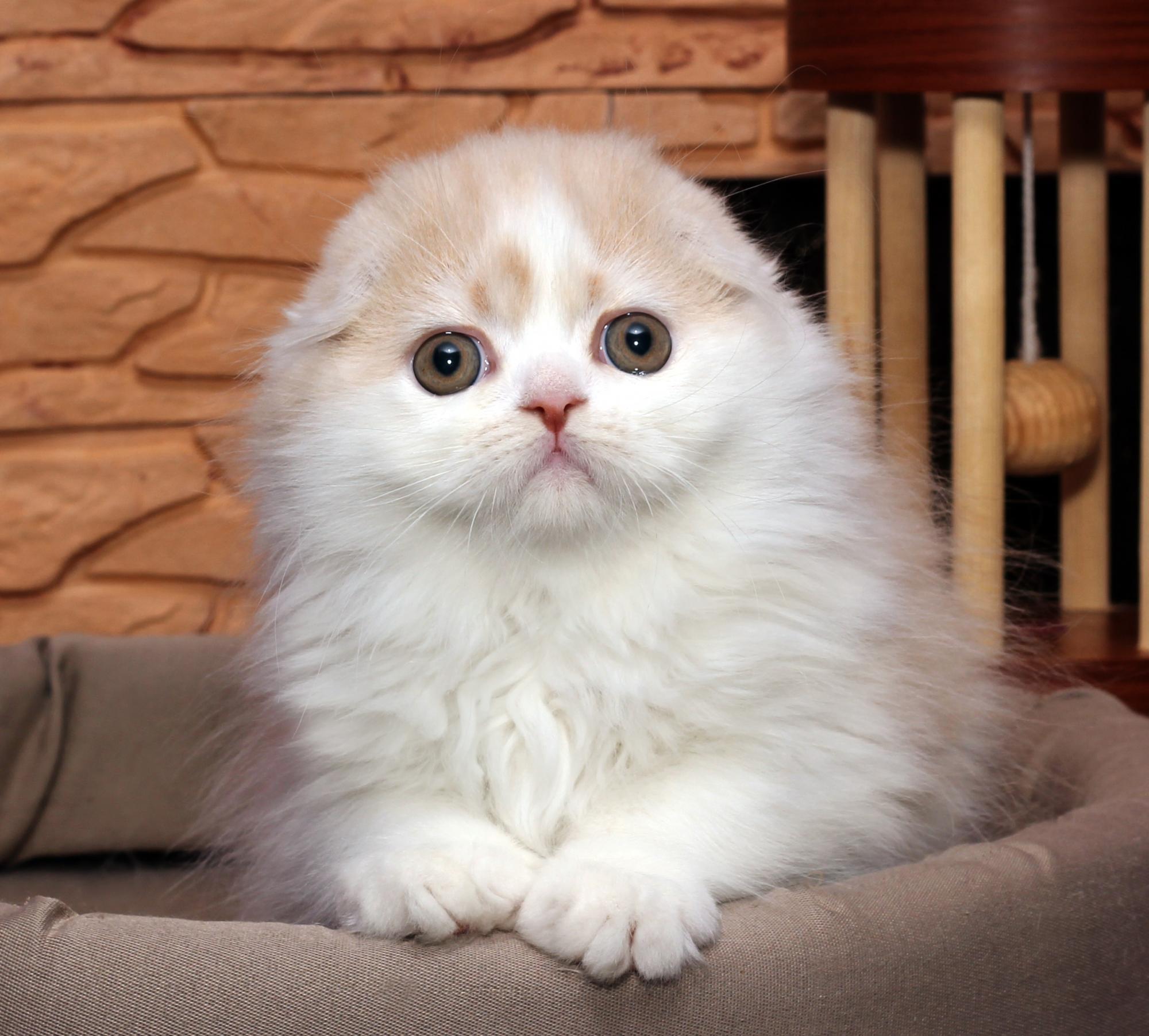 Фото самых няшных котят картина