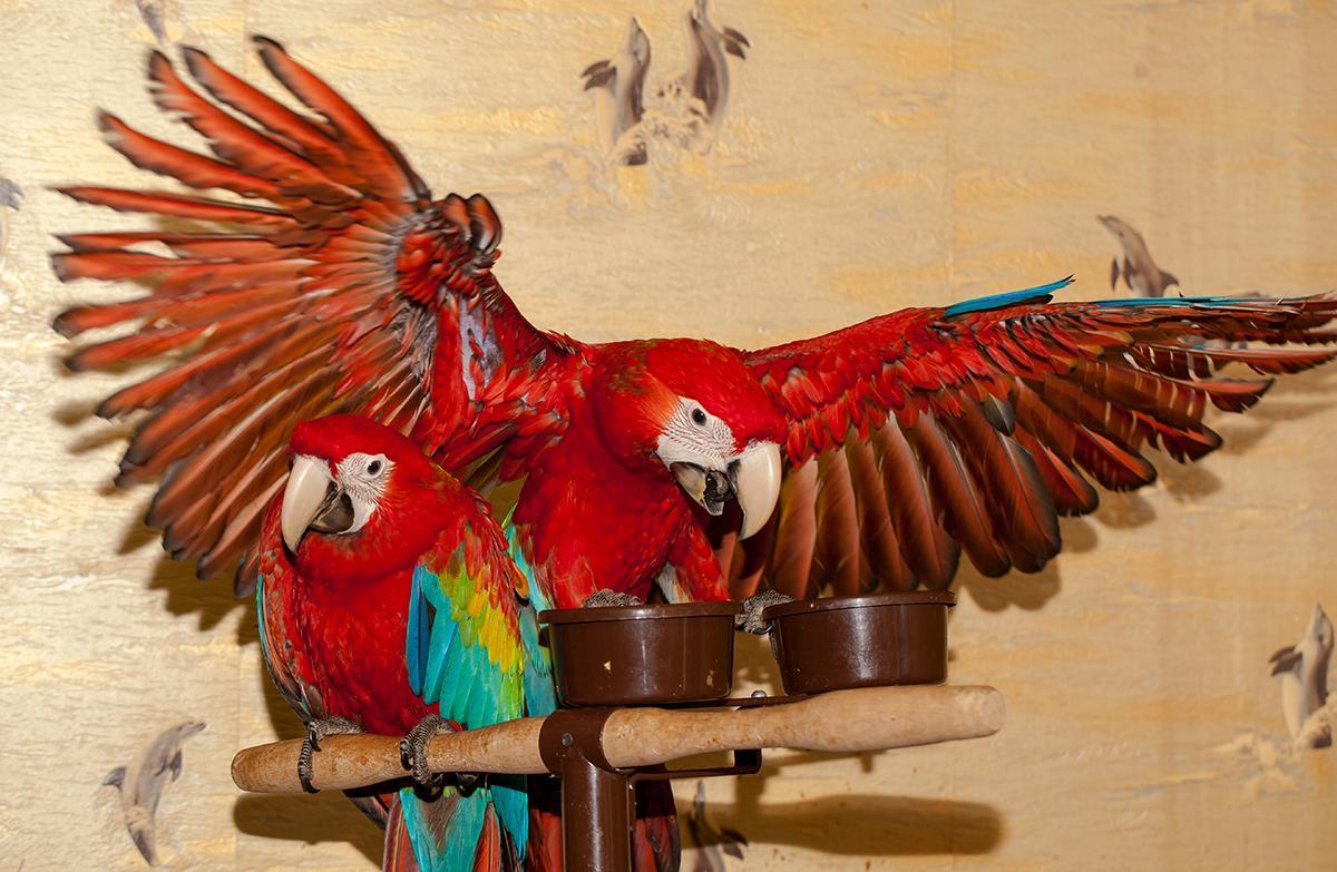 бизнес строение попугая фото пожаловались
