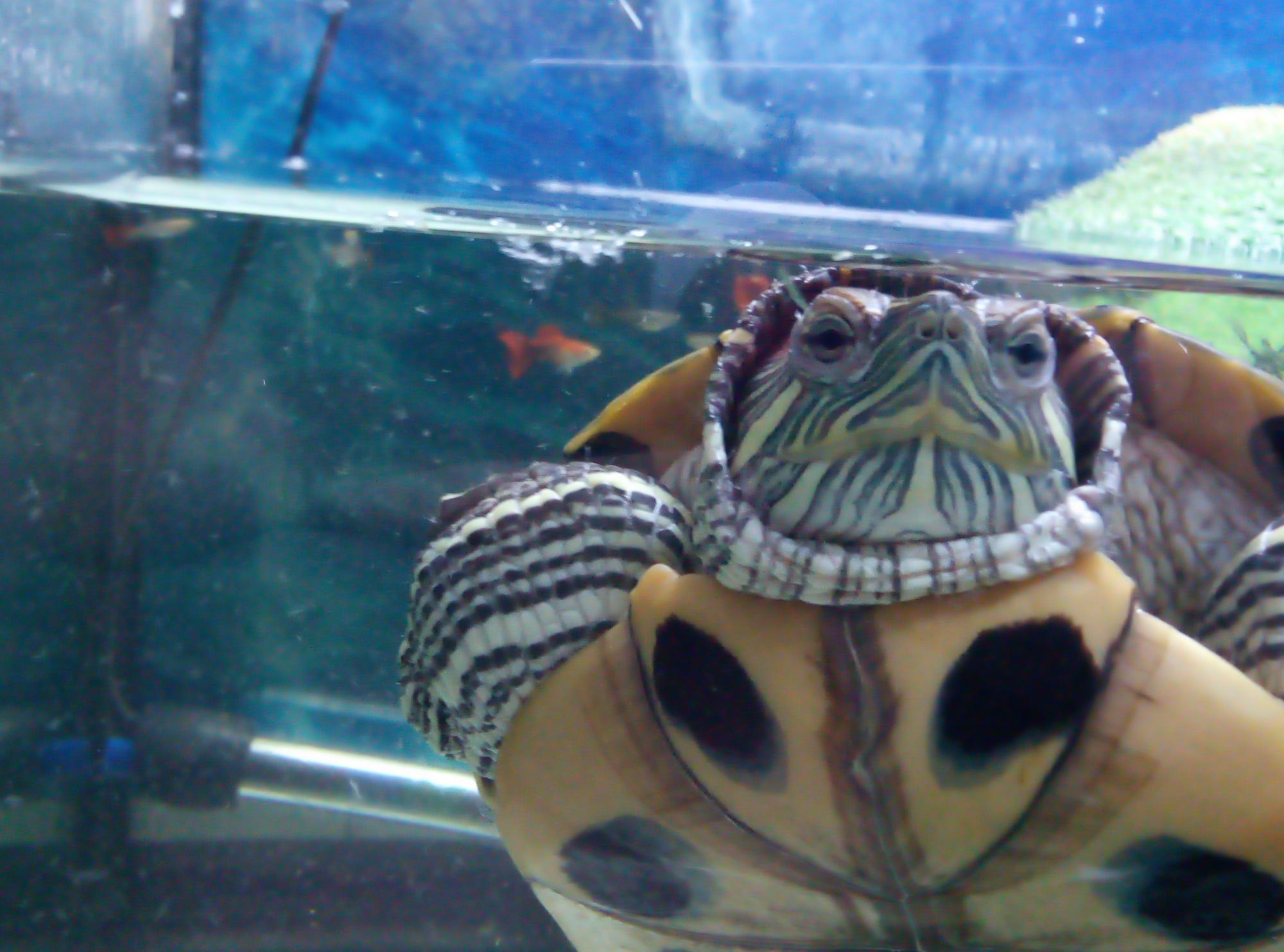Черепахи в Подольске