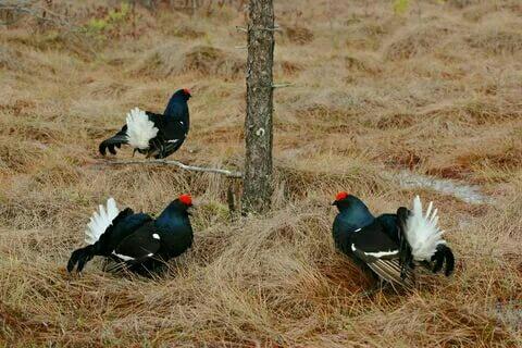 Весенняя охота для начинающих в Москве 89067059957 купить 4