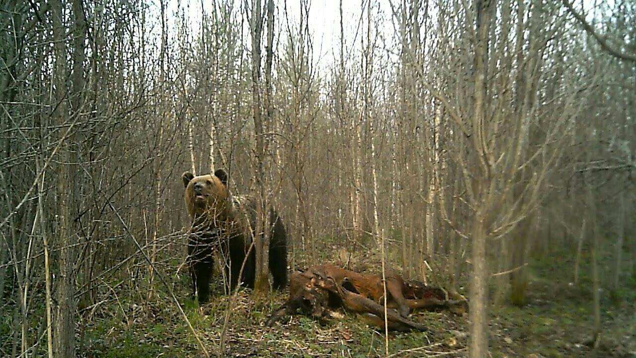 Весенняя охота для начинающих в Москве 89067059957 купить 6