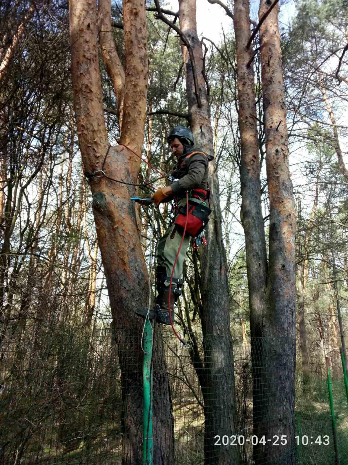 Спилим дерево любой сложности в Москве 89055060472 купить 1