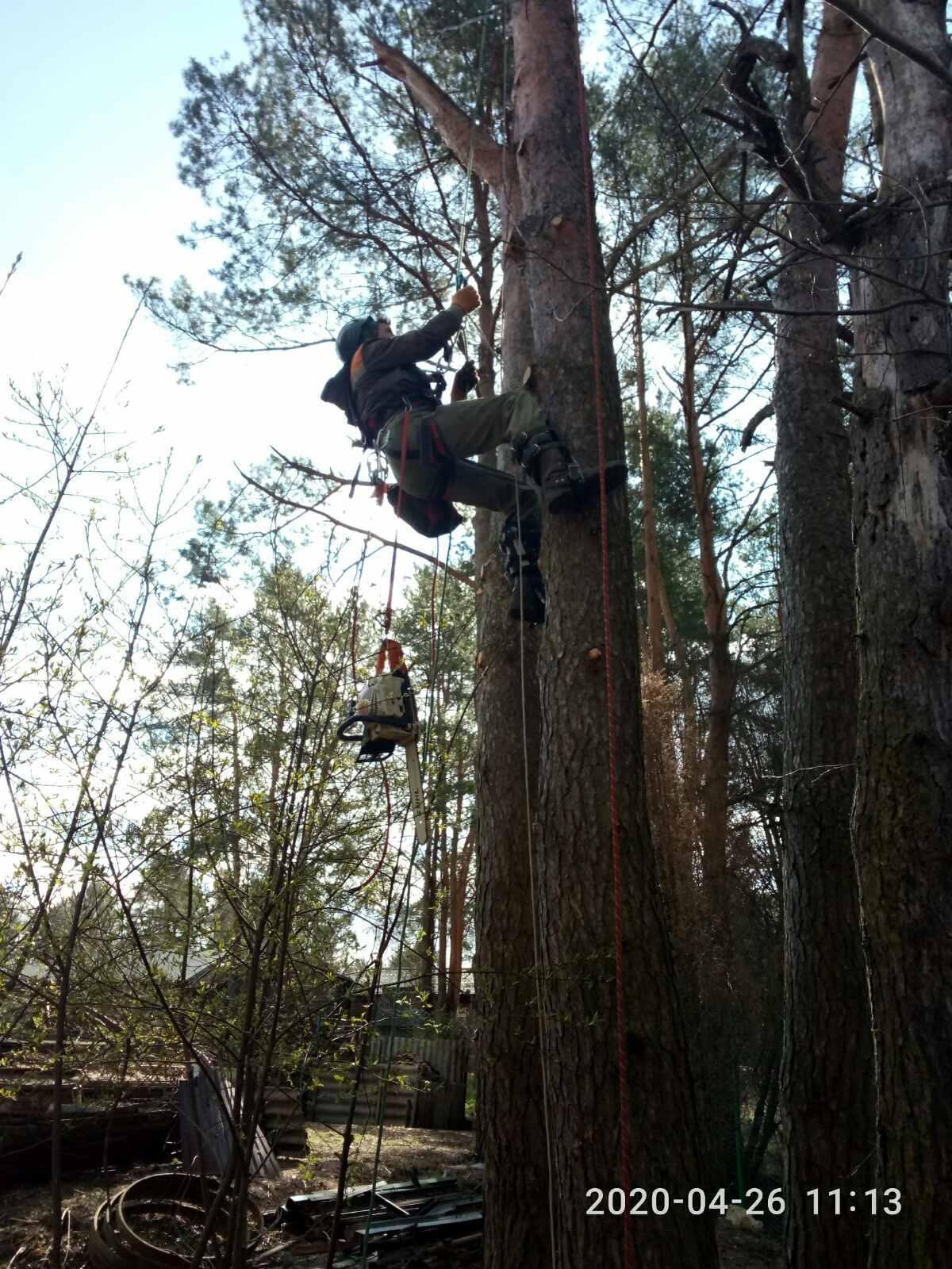 Спилим дерево любой сложности в Москве 89055060472 купить 2