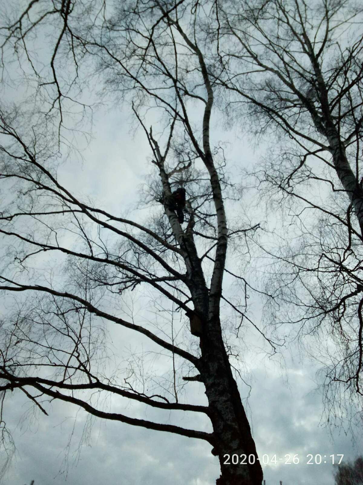 Спилим дерево любой сложности в Москве 89055060472 купить 3
