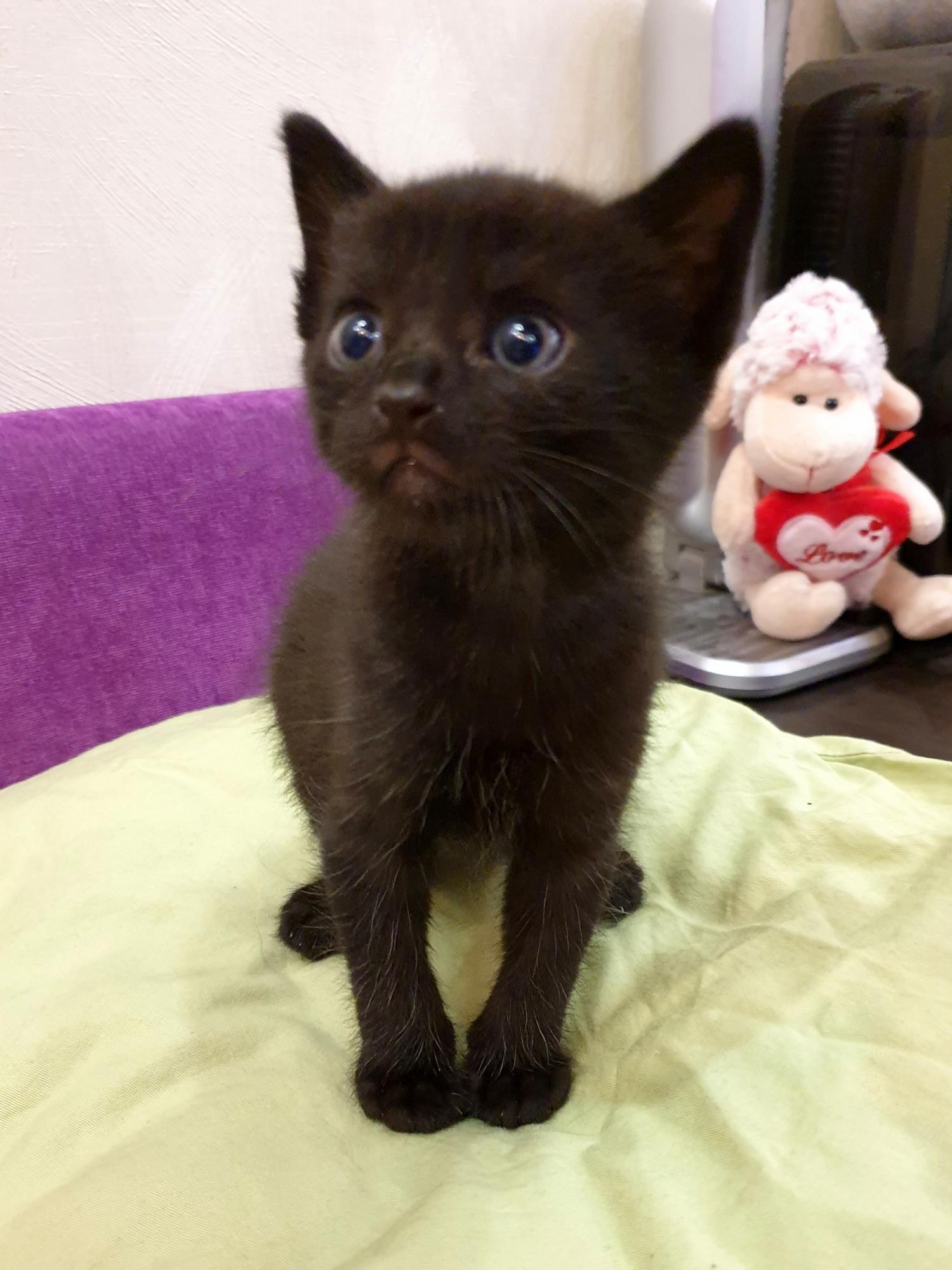 Котятки, родившиеся 9 мая! в Москве купить 5