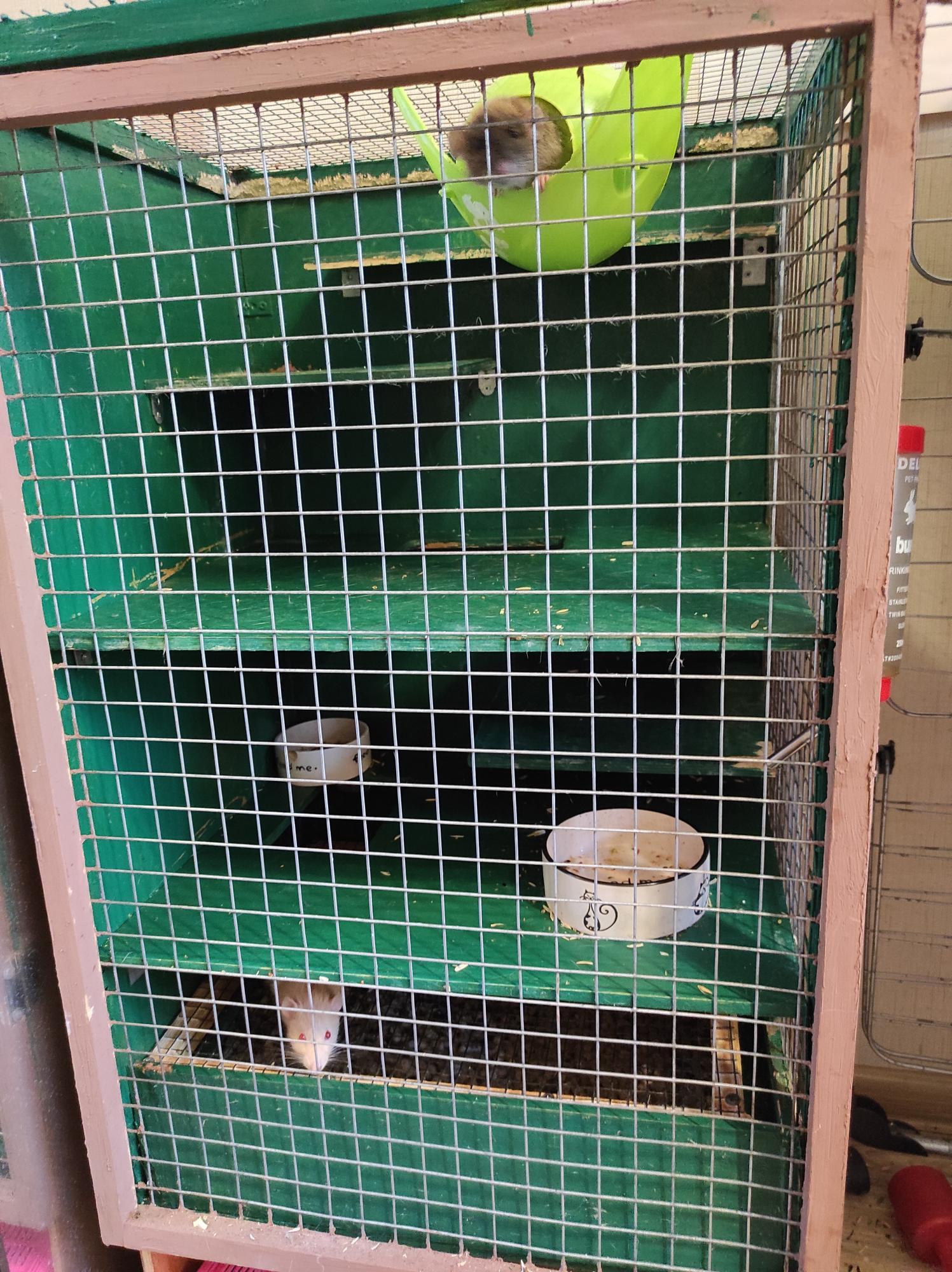 Декоративные крысы с клеткой - вальером в Москве купить 1