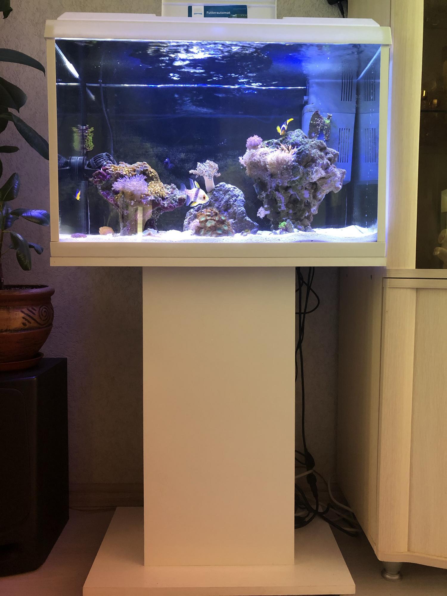 Морской мини аквариум в Москве